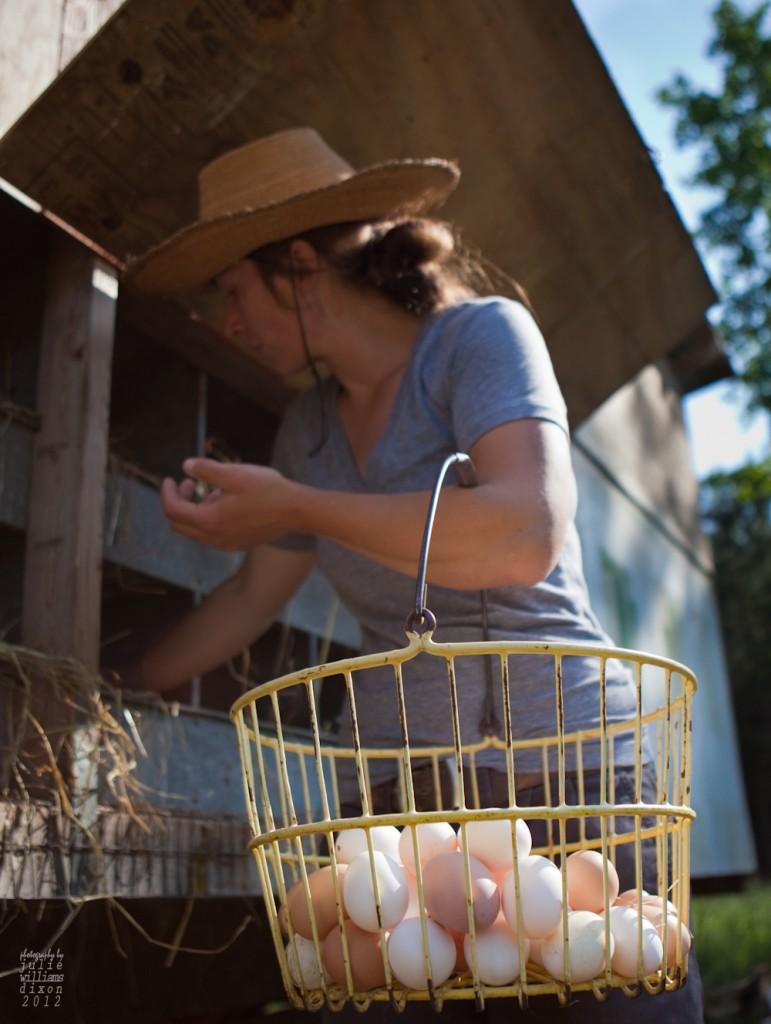 Fickle Creek, gathering eggs-Julie Williams Dixon. Photo Source: Carolina Farm Stewardship Association, NC.