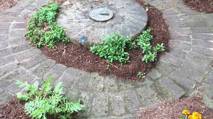 Herbs shown growing in a garden (Country Doctor Museum herb garden in Bailey NC). Photo: Nadia Ethier.