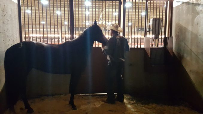 Mild mustang Asha in May 2016 at the Colorado Extreme Mustang Makeover with trainer Brian Sprague. Source: April Sprague.