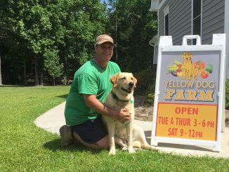 "Randy Whitley and Kady, the original ""yellow dog"" at Yellow Dog Farm, Wendell NC. Source: Kay Whatley."