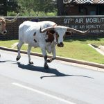 Texas Longhorn cattle walk off Altus Air Force Base, Okla. after the 18th annual Cattle Drive August 25, 2016. Approximately 18 Texas Longhorn cattle were driven through Altus AFB at this year's base Cattle Drive which provided opportunity for community members to share part of their culture with the Airmen and their families. Source: US Air Force photo by Senior Airman Dillon Davis.
