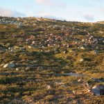 Reindeer bodies litter the slope following the lightning strike. Source: miljodirektoratet.no.