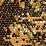 Baxter's Bees will be at the Zebulon Farm Fresh Market on September 24, 2016. Source: baxtersbees.com.