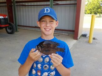 Elijah Crabtree holds the newly established state record for spotted sunfish, a 7.7-ounce fish caught on June 25, 2016. Credit: Kevin Crabtree, via ncwildlife.org.