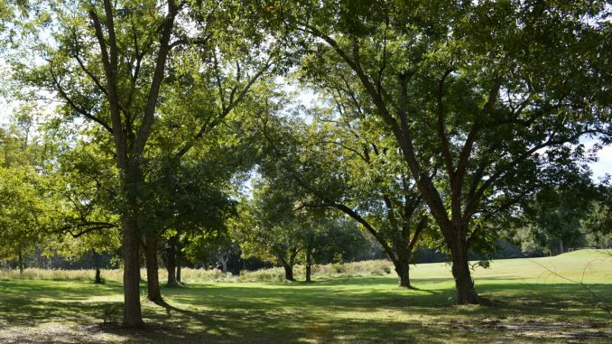 Wendell NC Pecan Orchard. Source: Phillip A. Smith II, Wendell NC Parks and Recreation.