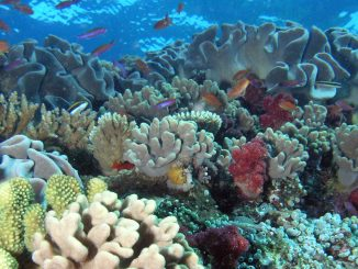 NASA coral reef studies in Hawaii this winter will help scientists understand this unique environment. Credit: NOAA