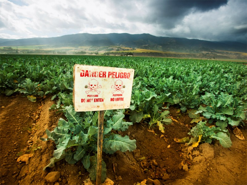 Chlorpyrifos is one of most widely-used pesticides in the U.S. and is responsible for a large percentage of pesticide poisonings reported. Source: PGIAM / ISTOCKPHOTO, via earthjustice.org.