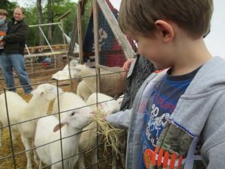 Haw River Ranch - David Darr. Photo Source: Carolina Farm Stewardship Association, NC.