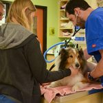 Owner Al Meteney, extern Neena Golden and Dr. Adam Stone check out Ollie after his miraculous recovery. Source: DoveLewis Emergency Animal Hospital, Portland OR.