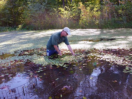 """For the second year, volunteers are needed to build """"exclosures"""" and plant native vegetation in Lake Gaston, North Carolina. Source: ncwildlife.org."""