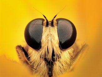 This close-up photo of an assassin fly took top honors in the 2015 Photo Competition. Photo: Frank Ellison of Clemmons NC.