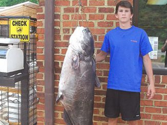 Landon Evans with record 117 lb, 8 oz Blue Catfish. Source: Landon Evans.