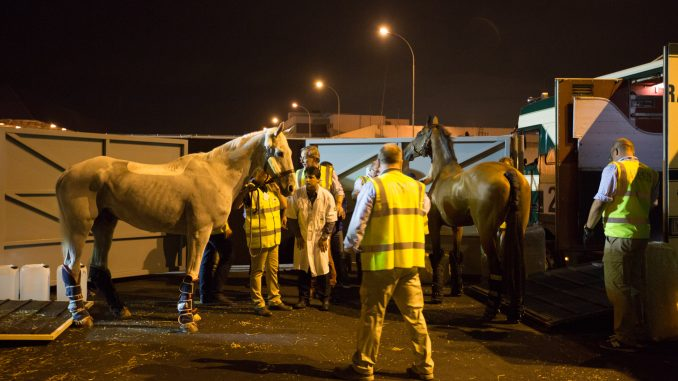 Horses arrive from Stansted Airport. Photo Credit: Gabriel Nascimento.