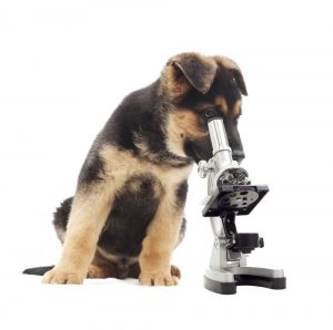 Genetic testing for pets is quickly catching up to its human counterpart. Source: PRNewsFoto/AVMA, Shutterstock.