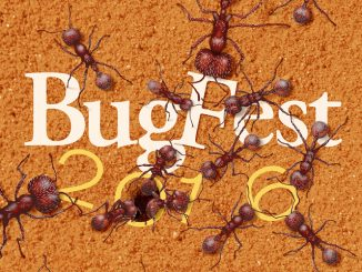 The annual BugFest is September 17, 2016. Source: North Carolina Museum of Natural Sciences, Raleigh NC.