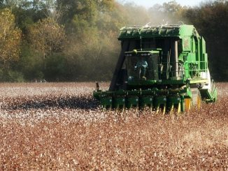 A 2013 photo of a Cotton Harvester in the field. Source: TS Designs, Burlington NC.