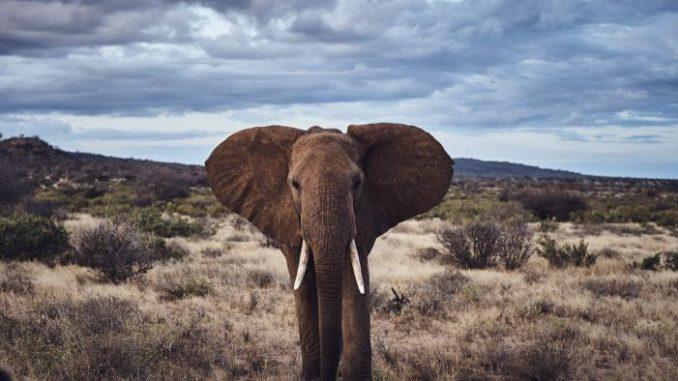 Source: Elephant Crisis Fund.