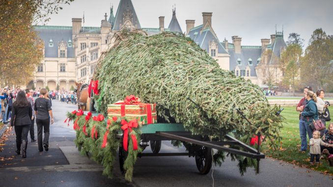 Biltmore At Christmas.Biltmore Towering Christmas Tree Arrives The Grey Area News