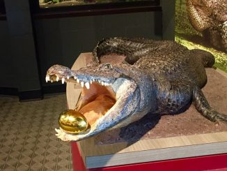 Alligator with golden egg. Source: Imperial Centre for the Arts and Sciences, Rocky Mount NC.