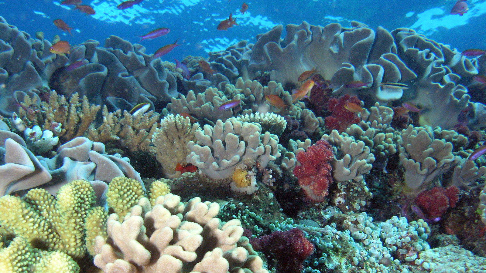 Nasa Tests Observing Capability On Hawaii S Coral Reefs