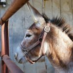 Donkey close-up. Source: Donna Campbell Smith