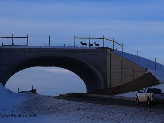 Wildlife crossing over Highway 9 in Colorado, via http://cpw.state.co.us. Credit: J. Richert, Blue Valley Ranch.