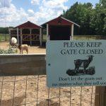 Entry gate at The Black Sheep Asylum, Middlesex, North Carolina. Photo: Kay Whatley.
