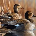 A pair of gadwall, by Delaware artist Richard Clifton, took top honors in the 2017 Conservation Stamp and Print competition. Source: NC Wildlife Resources Commission