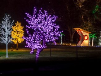 Airlie Gardens' Enchanted Airlie. Photo courtesy of Brett Cottrell, NHCNC