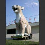 Leith's Cougar in Zebulon, North Carolina. Photo: Frank Whatley.