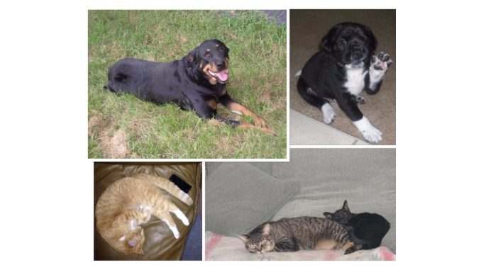 Cats and Dogs. Credit: Frank and Kay Whatley, Nadia Ethier