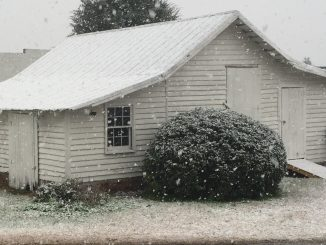 Snow falling in Eastern NC. Photo: Kay Whatley, 2016