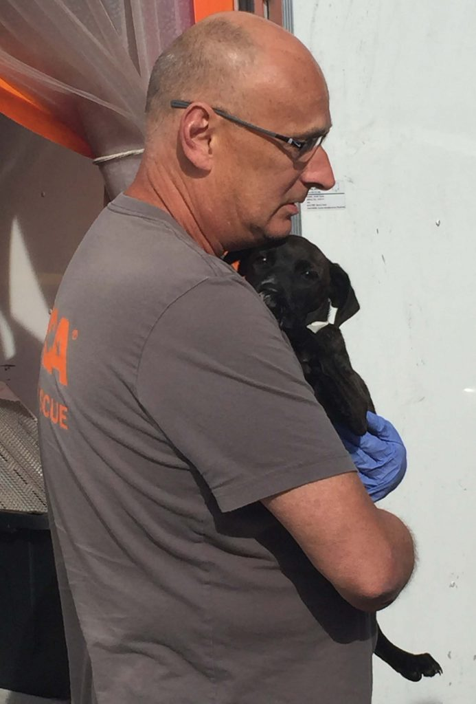ASPCA transporter and alert puppy. Photo: Kay Whatley