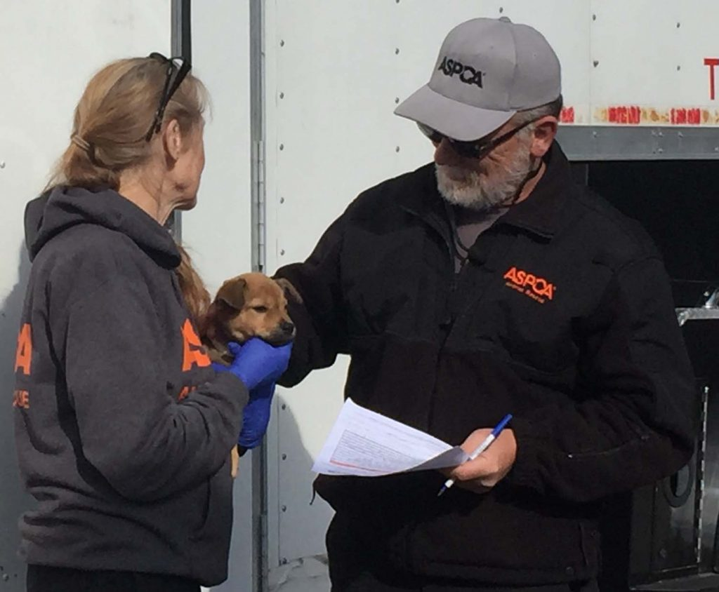 Checking pup's assigned number during hand-off. Numbers will help match each crucian canine with their vet records, which were also delivered. Photo: Kay Whatley
