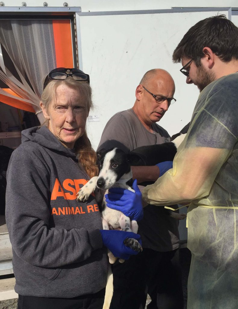 ASPCA transporter hands another pup over to an SPCA Wake employee, who is wearing protective gear. Photo: Kay Whatley
