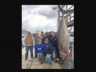 State Record Bluefin Tuna, 877 lbs, Caught by Scott Chambers (kneeling left) off NC Oregon Inlet on March 17, 2018. Source: NC DEQ
