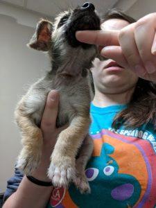 Nash with an SPCA of Wake County Volunteer. Source: SPCA of Wake County NC