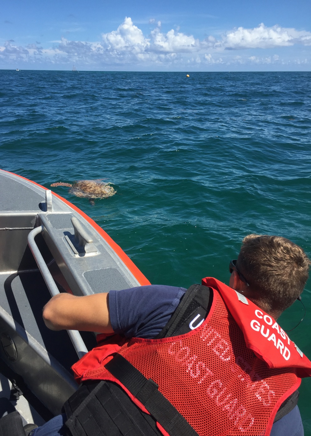 A Coast Guard Station Islamorada 24-foot Special Purpose Craft—Shallow Water boatcrew approach an injured sea turtle Tuesday, Sept. 18, 2018 approximately 2 miles southeast of Plantation Key. The station crew recovered the injured sea turtle from water and took it to the station where members of the Turtle Hospital took the turtle for further care. U.S. Coast Guard photo by Petty Officer 2nd Class Michael Lees