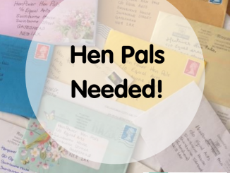 Call for Hen Pals for the HenPower program. Source: Equal Arts, Gateshead UK