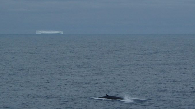 A fin whale surfaces at 58˚S in the southern Indian Ocean in a photo captured in January 2010 from the R/V Marion Dufresne, the research vessel that collected hydrophone data for the new study. Credit: J-Y Royer