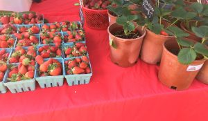 Wrenn's Farm Strawberries and strawberry plants for sale at a farmers market stand. Photo: Kay Whatley