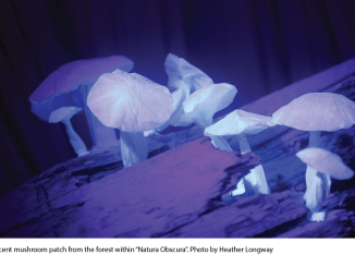 "A luminescent mushroom patch from the forest within ""Natura Obscura"". Photo: Heather Longway. Source: Blake Communications"