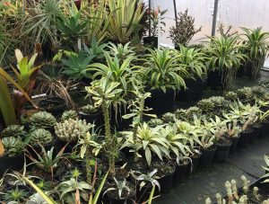 Tropical plants in a Garden Treasures off-site greenhouse. Photo: Kay Whatley