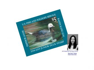 The 2018 national Junior Duck Stamp winner, as shown on the 2018-19 official contest brochure. Source: US FWS