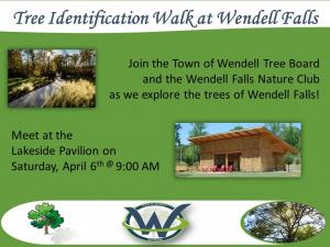 Tree Identification Walk 2019 flyer. Source: Sherry Scoggins, Town of Wendell