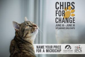 Chips for Change program cat flyer. Source: SPCA of Wake County, North Carolina