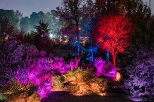 Moonlight in the Garden at JC Raulston Arboretum, NCSU. Photo: Frank Clemmensen