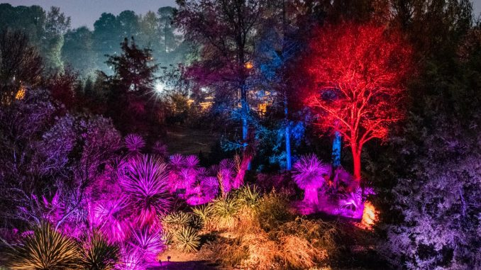 Moonlight in the Garden at JC Raulston Arboretum, NCSU. Photo: Frank Clemmensen