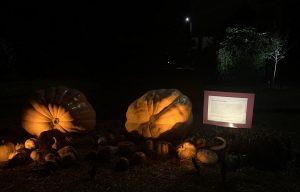 Giant touchable pumpkins. Photo: Nadia Ethier
