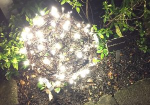 Rhododendron and orb at Moonlight in the Garden. Photo: Kay Whatley